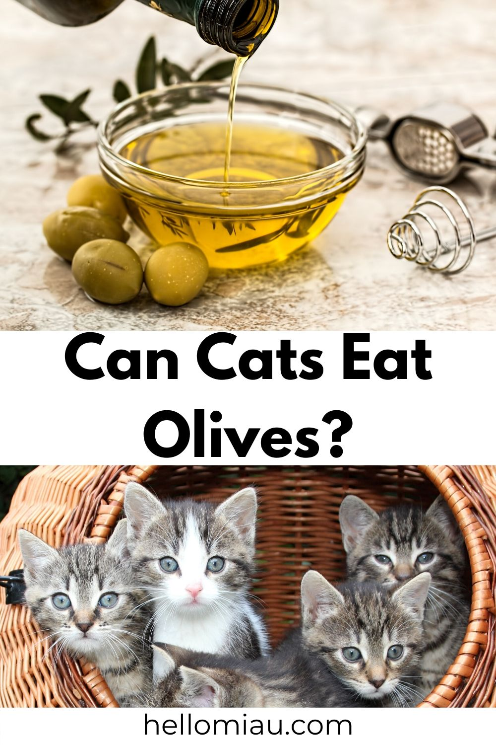 Can Cats Eat Olives?