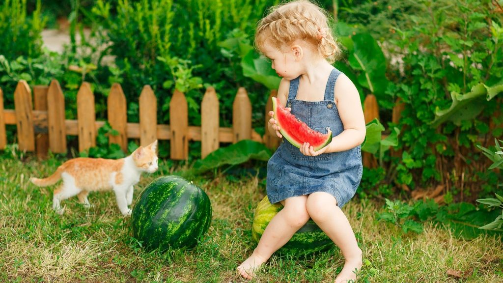 cat with girl eating watermelon
